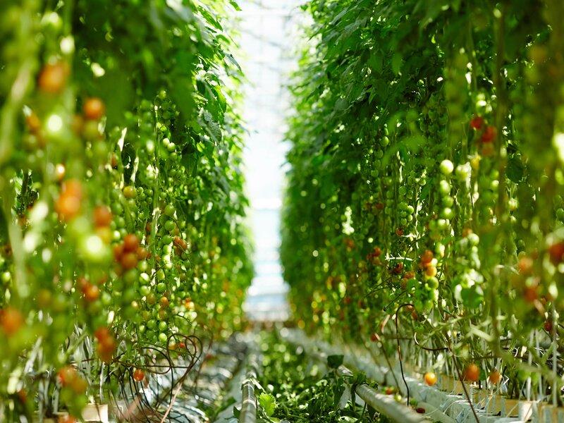 Recruter des cadres et techniciens de l'agribusiness