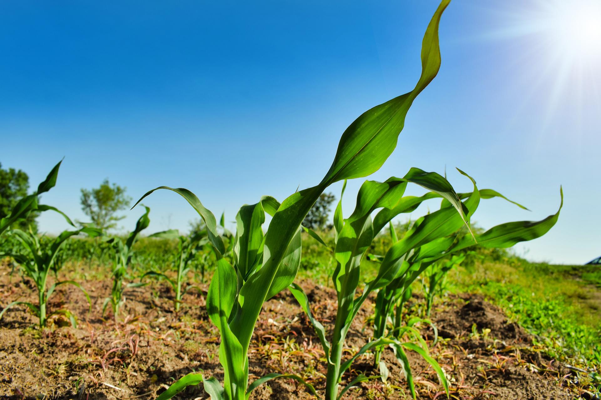 Recruter dans le secteur agricole