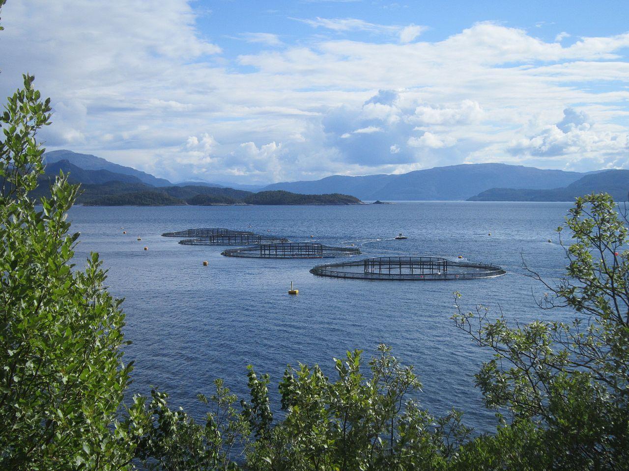 emploi en aquaculture