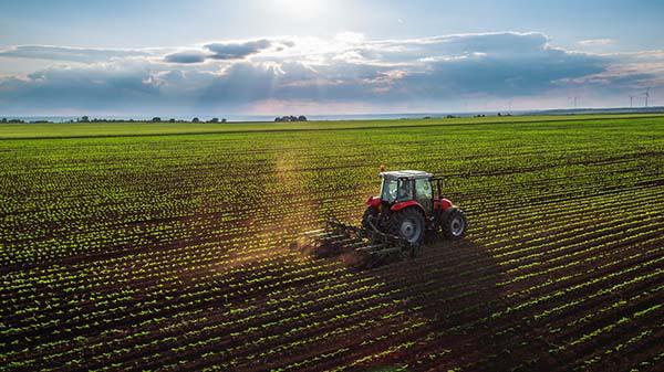 tracteur sur culture